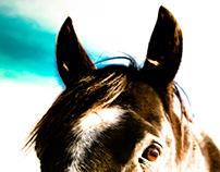 Black Horse, (a brief meeting)