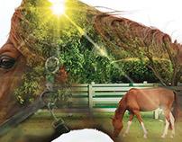 Zoetis Animal Health Calendar