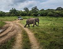 Moment Ⅰ·Sri Lanka