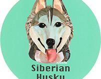 025 | Siberian Husky
