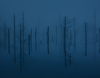 Silent Trees