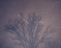 Naked Trees 2
