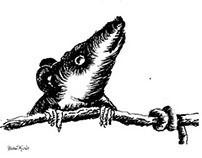 Ratas y Musarañas