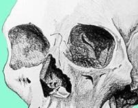Seafoam Skull