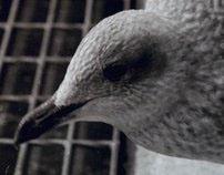 See! Gulls