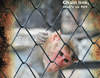 Monkey's of the Santa Ana Zoo