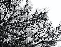 alberi / trees