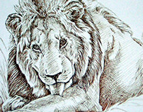 Lion Drawing by Shelley Fairbanks