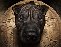 Sharpei Hórus - Photo Manipulation