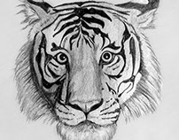 Tiger Drawing by Shelley Fairbanks