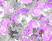 TEXTILE DESIGN - Photo-Real Floral