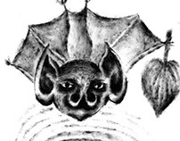 all about bats \ все о летучих м.