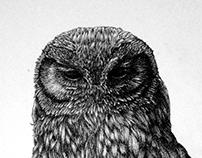 Black Pen Owl
