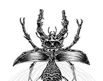 NecroLucanidae