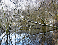 Flooded Woodland #1