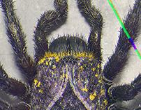 Spider Of Spades