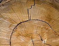 Linien & Skizzen auf Holz - Lines & sketches on wood