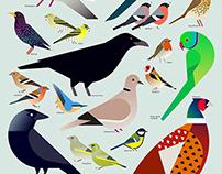 Studio.Build - British Bird Chart