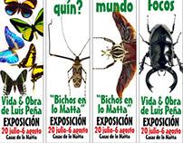 Luis Peña. Bugs in lo Matta | Bichos en lo Matta