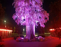 Gamuda cave, wishing tree