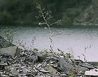 Shale Quarry Recultivation of 2010