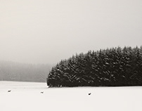 Winterscape. Bavaria.