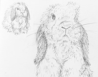 Life Drawings - Rabbits