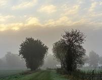 Fog and autumn