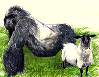 Gorilla and Sheep
