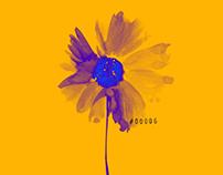 Flower series_NFT