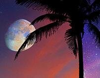 A Serene Starry Night