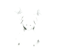 my pig head