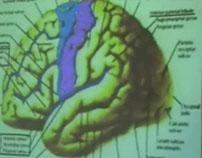 Brain Functional Areas1-Frontal Lobe – Sanjoy Sanyal