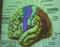 Brain Functional Areas1-Temporal Lobe – Sanjoy Sanyal