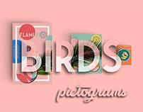 BIRDS || Pictograms