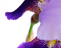 Iris & Abstractions