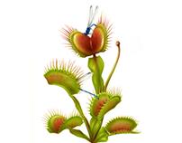 Botanical artwork for the magazine PARTERRE DE ROIS
