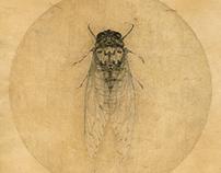 CicadasⅡ