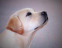 Sessione Fotografica canina all'Uliveto Principessa