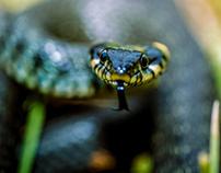 """amphibians & reptiles"""