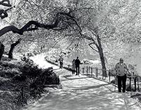 Copy of Black & White Film Photographs