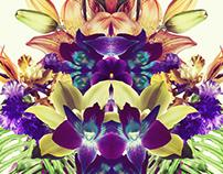 Blooming / Azzur
