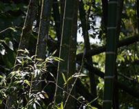 Taller de bambú - muebles rústicos