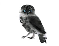 different sketches of owls