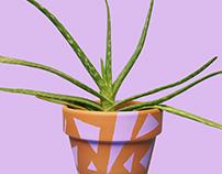 Colorventures: Cacti + Succulents