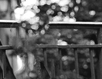 The Erased Honeymoon - Anthéa Ferreira