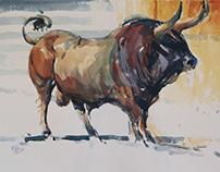 Bull Study