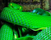 Snakesssss