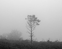 Mist in Estaca de Bares