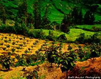 Colombian beauty